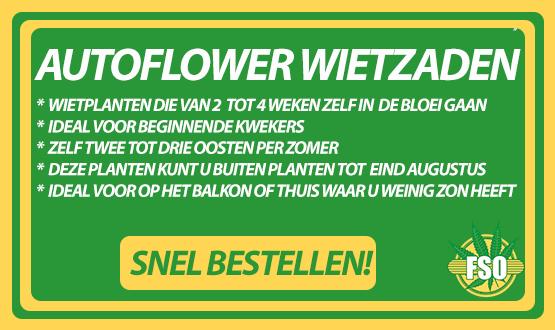 Autoflower wiet zaden kopen