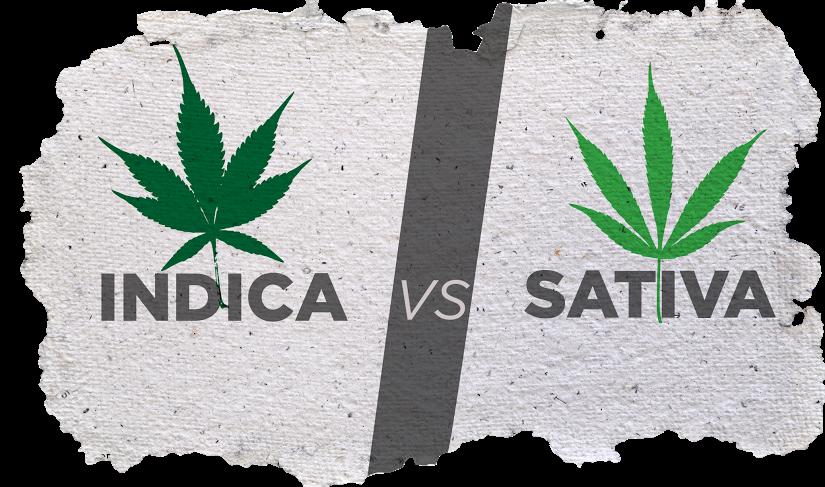 Indica en Sativa wietplant