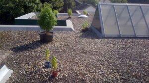 Wietplant kweken op dak