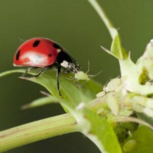 Biologisch schimmel en ongedierte bestrijden