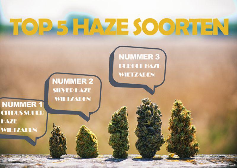 Top 5 Haze soorten