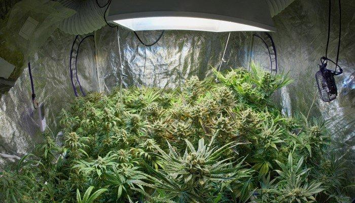 Binnen kweken